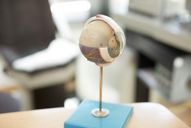 Modell eines Auges